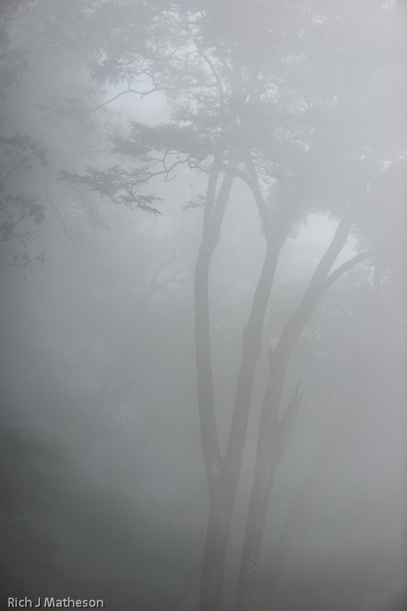 Trees in the Mist, Dasyueshan Forest Recreation Area, Taichung, Taiwan