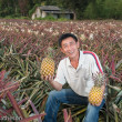 Pineapple Farming in Taiwan